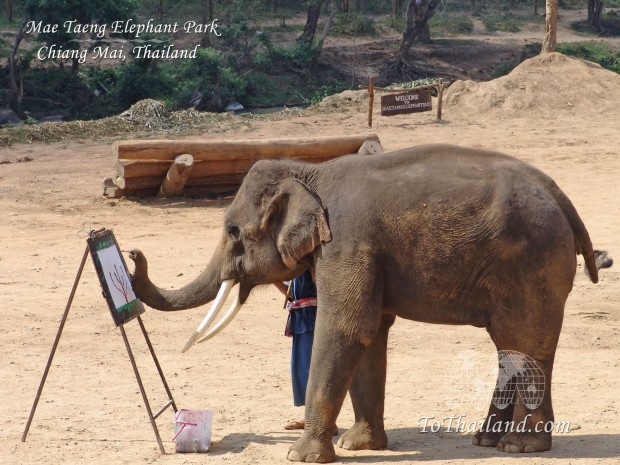 elephant-hd-wallpaper-2014